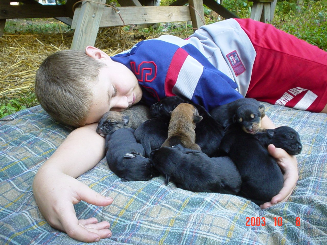 Newborn Puppy Dog Pictures And Details